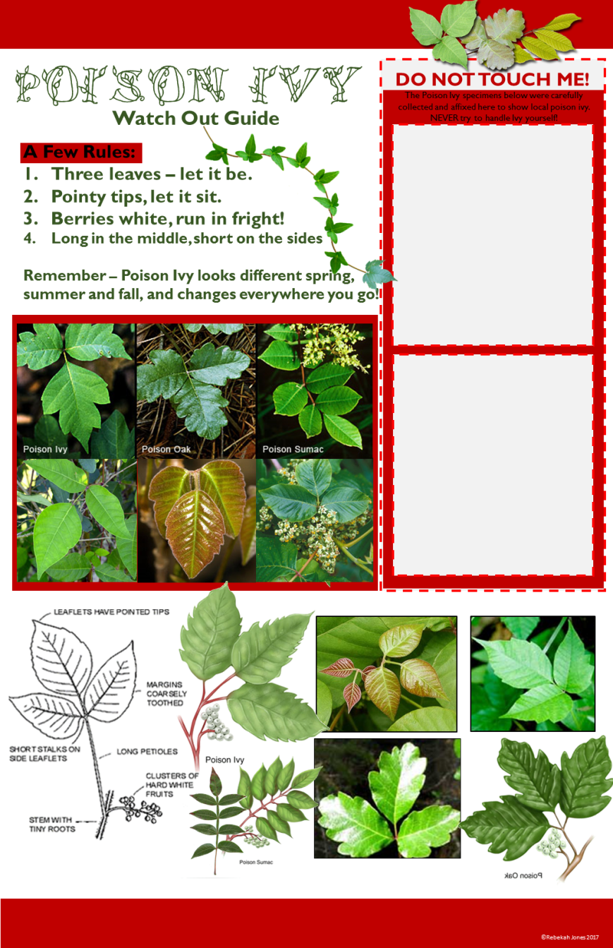 Poison Ivy Guide